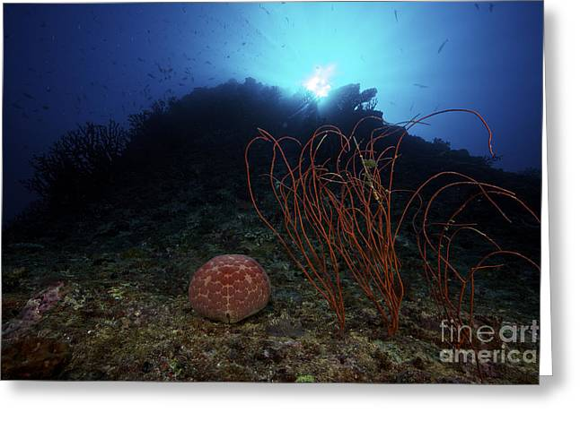 A Large Pin-cushion Sea Star Greeting Card by Terry Moore