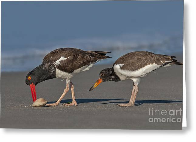 A Lesson In Fine Dinning Greeting Card by Susan Candelario