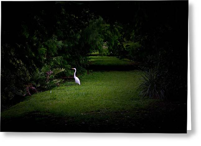A Light In The Forest Greeting Card by Mark Andrew Thomas