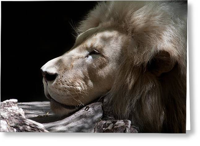 A Lions Portrait Greeting Card by Ralf Kaiser