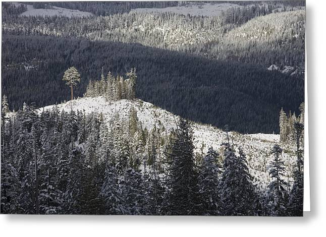 A Lone Stand Of Trees Stands Greeting Card by Taylor S. Kennedy