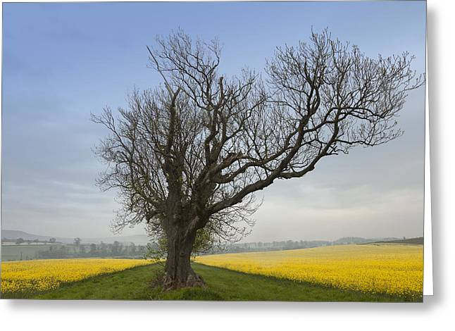 A Lone Tree On The Edge Of A Yellow Greeting Card by John Short