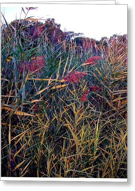 A Long Island Saltwater Grass In Bloom Greeting Card