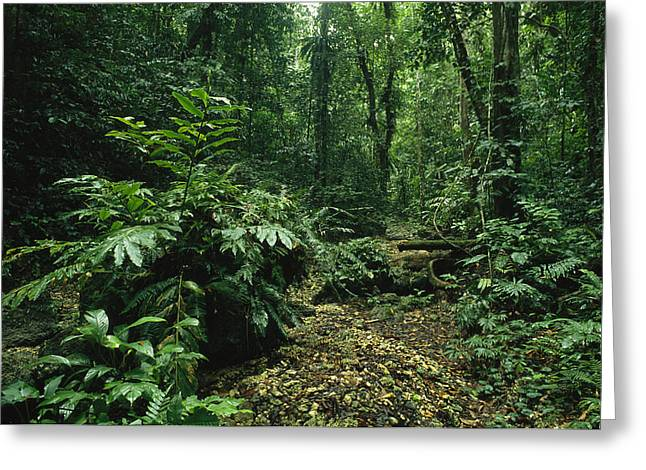 A Lush Woodland View In Papua New Greeting Card