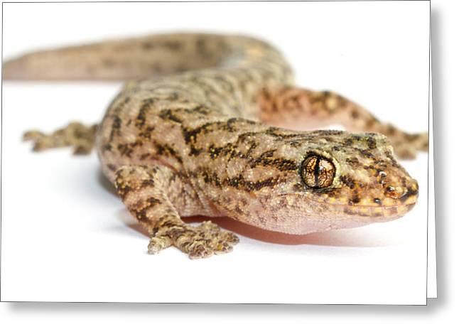 A Marble Gecko Sits In Studio Striking Greeting Card by Brooke Whatnall