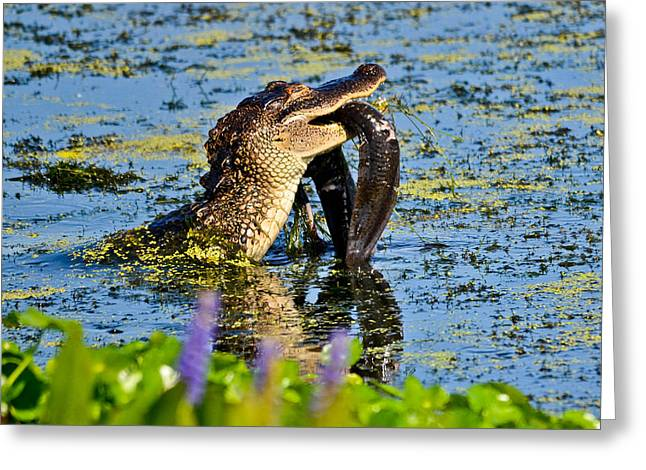 A Meal Fit For A Gator Greeting Card by Julio n Brenda JnB