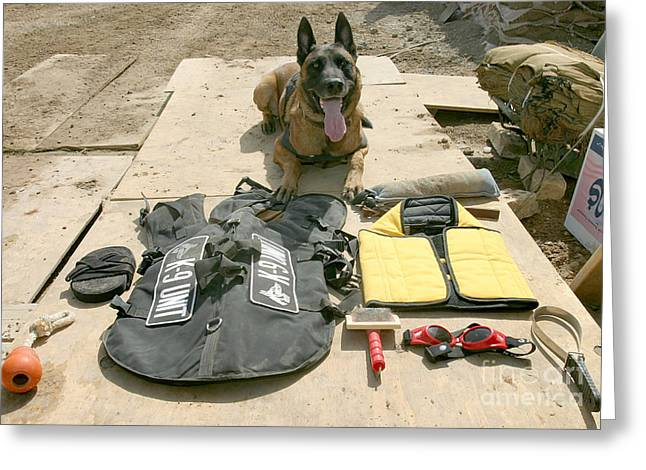 A Military Police Dog Sits Greeting Card by Stocktrek Images