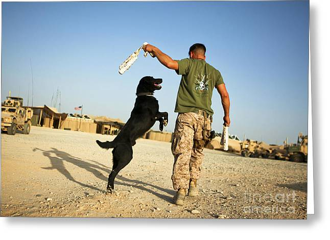 A Military Working Dog Handler Conducts Greeting Card by Stocktrek Images