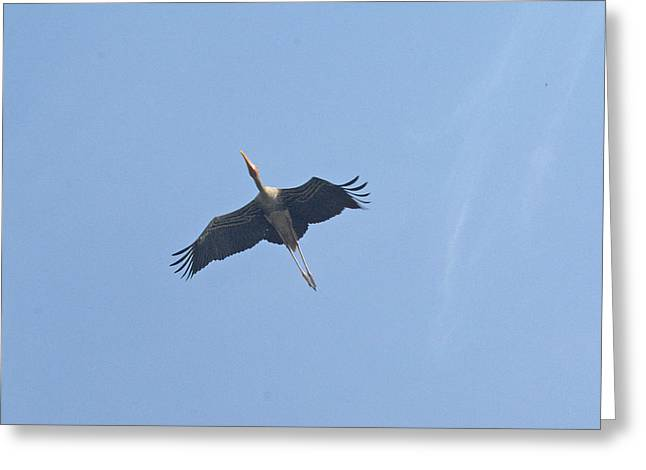 A Painted Stork Flying High In The Sky Greeting Card by Ashish Agarwal