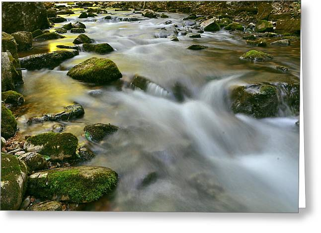 A Painted Stream Greeting Card by Jeff Rose