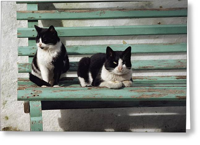 A Pair Of Cats On A Bench Greeting Card by James L. Stanfield