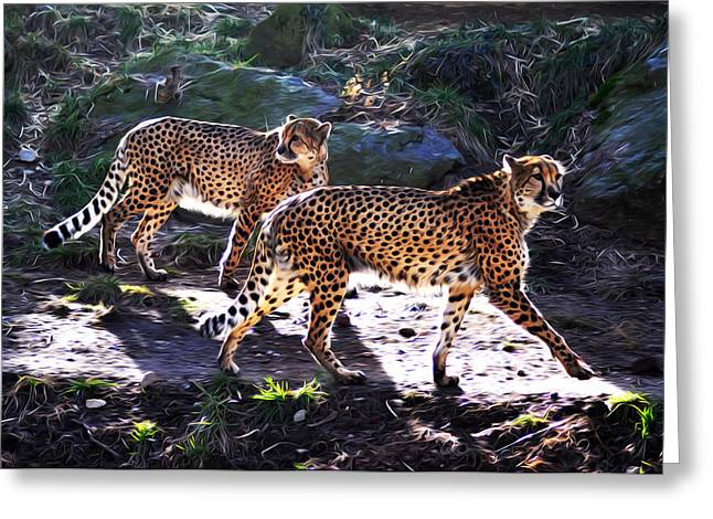 A Pair Of Cheetah's Greeting Card by Bill Cannon