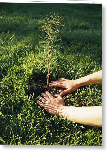 A Pair Of Hands Gently Tamp Soil Greeting Card by Scott Sroka