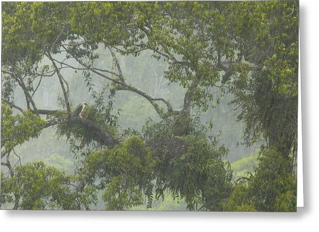 A Pair Of Philippine Eagles Greeting Card