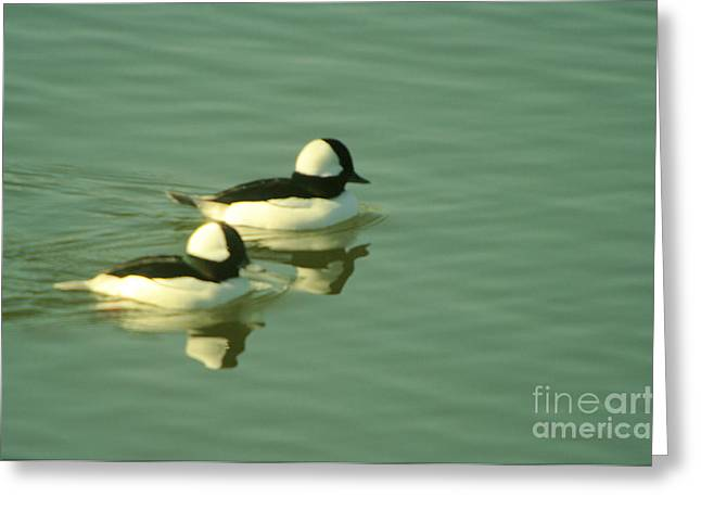 A Pair Of Reflecting Birds  Greeting Card by Jeff Swan