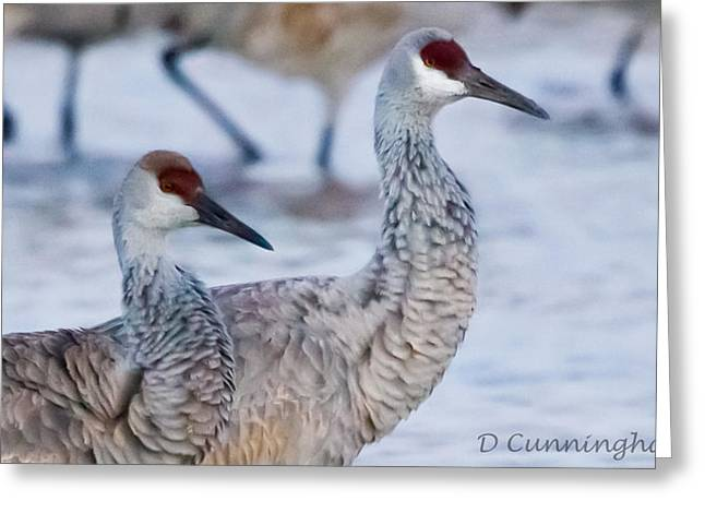 A Pair Of Sandhill Cranes Greeting Card
