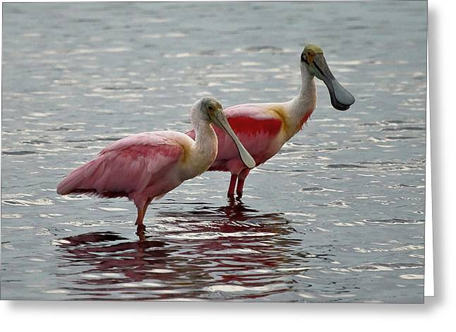 A Pair Of Spoonbills Greeting Card