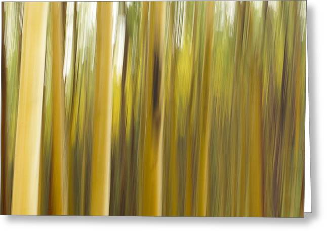 A Panned View Of A Forest In Autumn Greeting Card by Raul Touzon