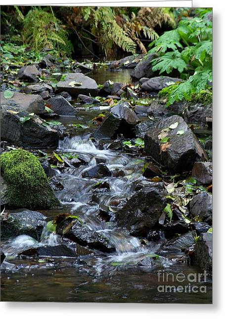 Greeting Card featuring the photograph A Peaceful Stream by Chalet Roome-Rigdon