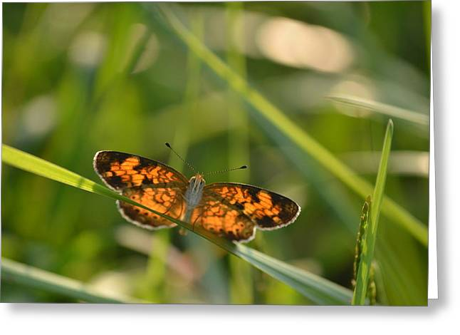 Greeting Card featuring the photograph A Pearl In The Grass by JD Grimes