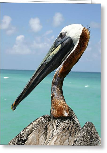 A Personable Pelican Portrait Greeting Card by Stephen St. John