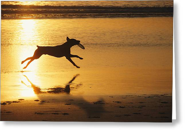 A Pet Dog Runs With A Frisbee Greeting Card