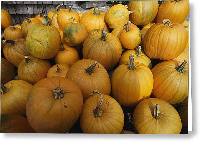 A Pile Of Pumpkins Greeting Card by Bill Curtsinger