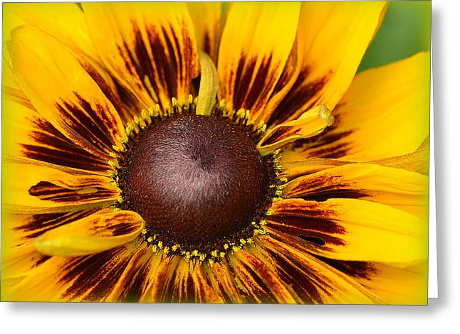 A Pocket Full Of Sunshine... Greeting Card