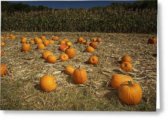 A Pumpkin Patch With A Corn Field Greeting Card by Tim Laman