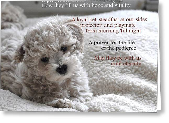 A Puppy's Prayer Greeting Card