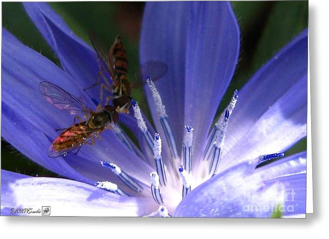 A Quiet Moment On The Chicory Greeting Card by J McCombie
