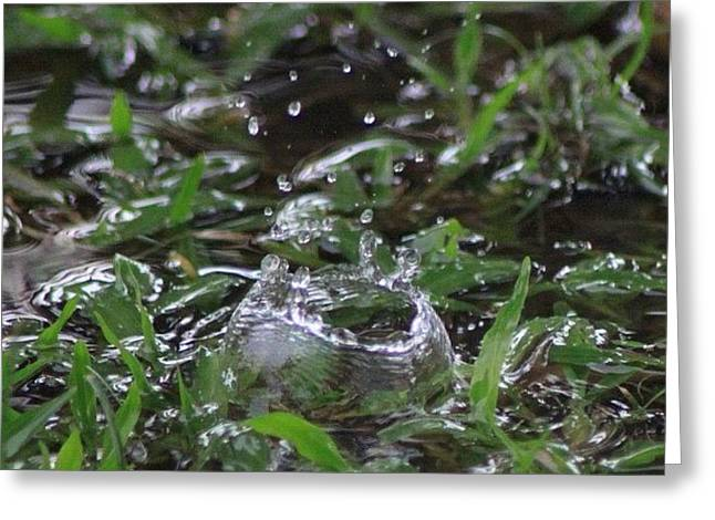 A Rain Drop Hits The Grass In My Greeting Card