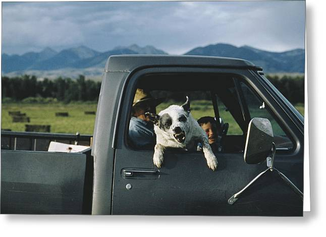A Ranchers Dog Snarls Greeting Card by Joel Sartore