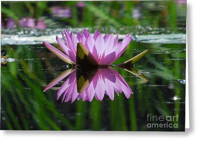 A Reflection Of A Fuchsia Water Lily Greeting Card by Chad and Stacey Hall