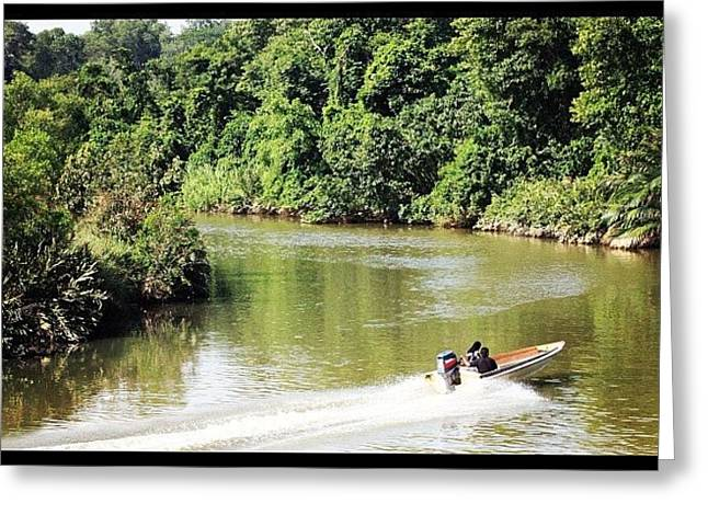 A Ride Amongst The Mangroves, Taken Greeting Card