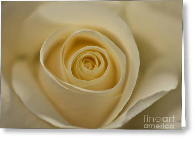Greeting Card featuring the photograph A Rose By Any Other Name by Julie Clements