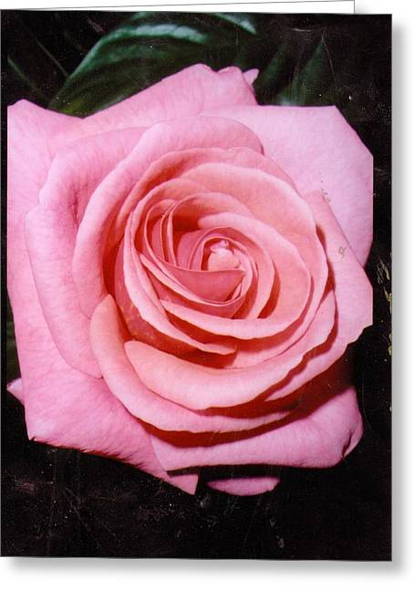 A Rose By Any Other Name Would Still Smell Just As Sweet Greeting Card by Anne-Elizabeth Whiteway
