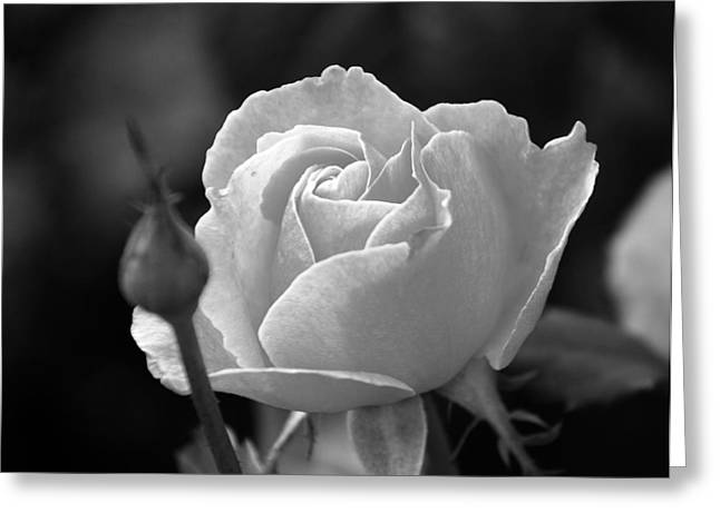 Greeting Card featuring the photograph A Rose In Black And White by Janice Adomeit