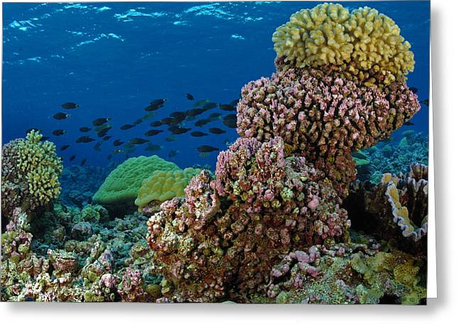 A School Of Fish Swimming Over Coral Greeting Card