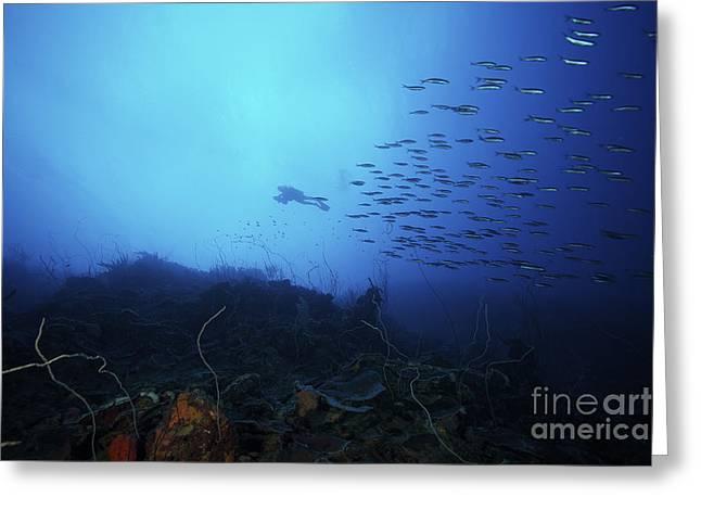 A Scuba Diver Explores A Deep Drop Greeting Card