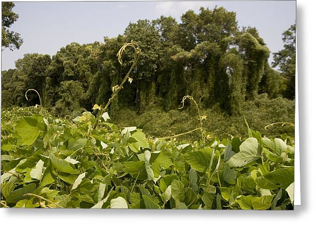 A Sea Of Kudzu Vines Takes Greeting Card by Stephen St. John