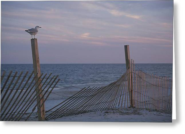 A Seagull Pauses Greeting Card by Stacy Gold