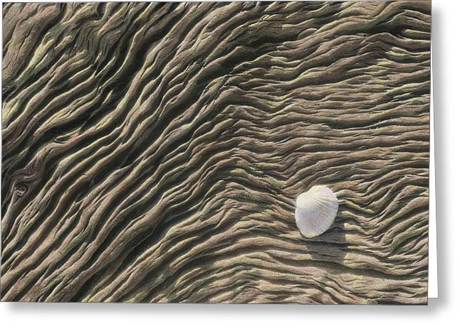 A Seashell Lies On A Deeply Grooved Greeting Card