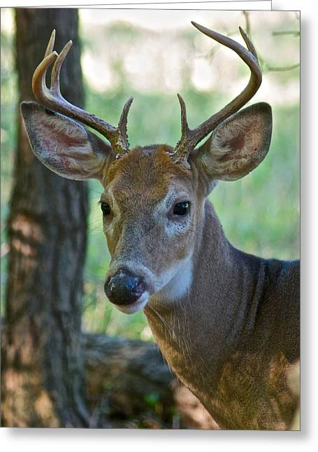 A Seven Point Profile 9752 Greeting Card by Michael Peychich