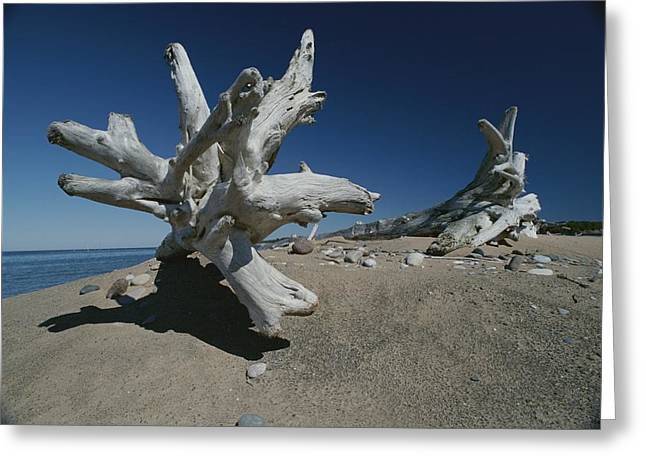 A Shot Of Some Driftwood On A Beach Greeting Card by Raymond Gehman