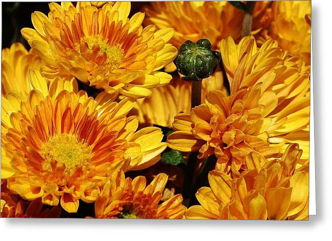 A Sign Of Fall Greeting Card by Bruce Bley