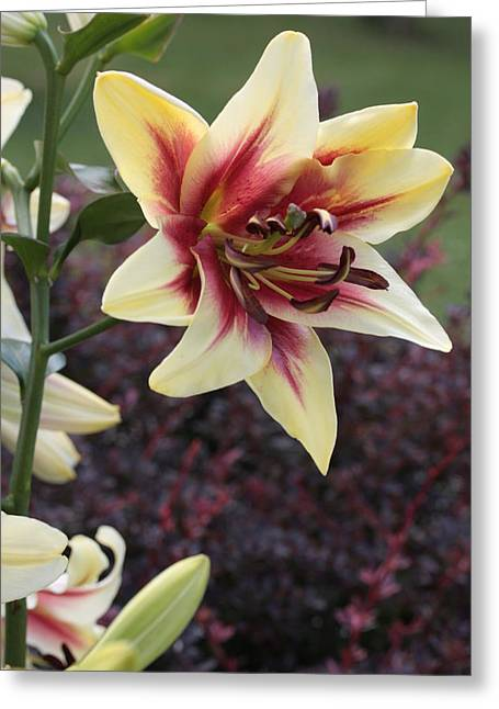 A Single Bloom Greeting Card by Mike Lytle