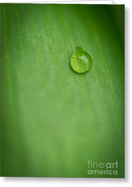 A Single Drop Greeting Card by Melle Varoy