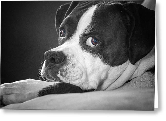 Greeting Card featuring the photograph A Soulful Expression by Steve Benefiel