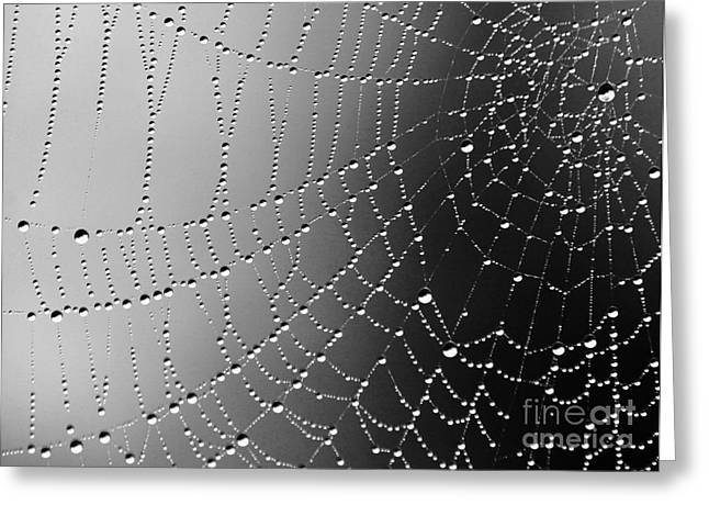 A Spider Designs The Universe Greeting Card by Ronnie Glover